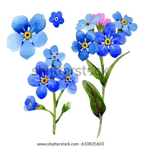 Myosotis-arvensis Stock Images, Royalty-Free Images & Vectors ...
