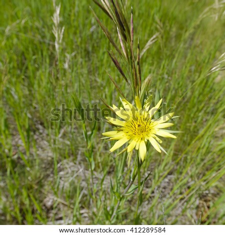 Wildflower on a meadow in Montana - stock photo