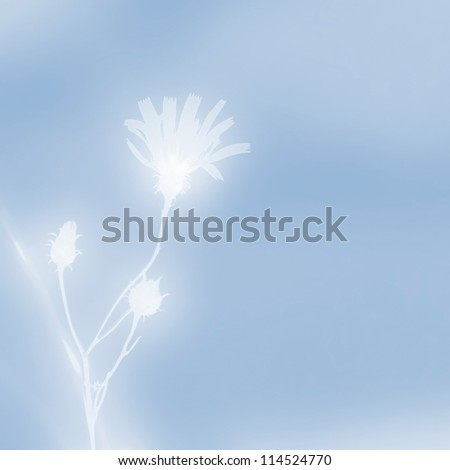 Wildflower silhouette against the blue sky