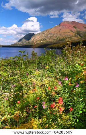 Wildflowers along the shoreline of Two Medicine Lake in Glacier National Park - Montana - stock photo