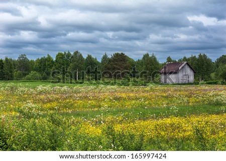 Wildflowers and a lost barn in southern Finnish Lapland. Lots of colors of the flowers against a green forest and heavy gray-blue skies. - stock photo