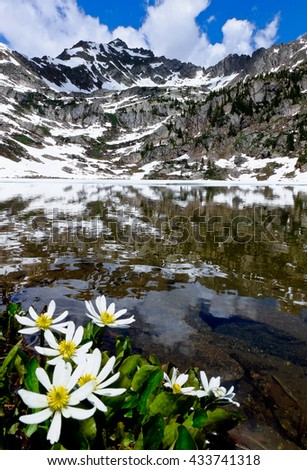 Wildflowers and Snowy Mountain Reflected in Pitkin Lake.