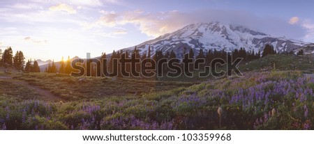 Wildflowers at sunset near Mount Rainier, Washington - stock photo