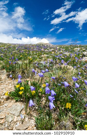 Wildflowers blooming in the Colorado Rocky Mountain Summertime - stock photo