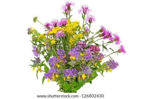 Wildflowers bouquet isolated on white background - stock photo