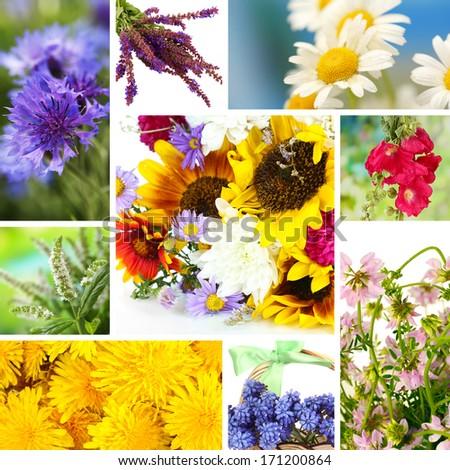 Wildflowers collage - stock photo