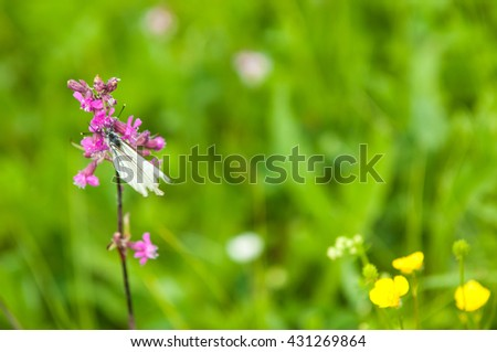 Wildflowers, Colorful wildflowers blossoming in field. A wildflower meadow. beautiful rural landscape with the sunrise and blossoming meadow.  - stock photo