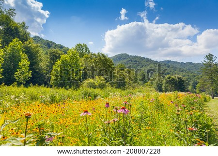 Wildflowers growing at Roan Mountain State Park - stock photo