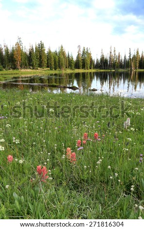 Wildflowers in a meadow, Utah, USA. - stock photo