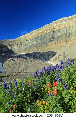 Wildflowers in the Utah Mountains, USA. - stock photo