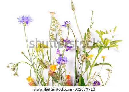 Wildflowers isolated on white - stock photo