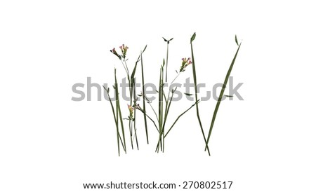 wildflowers isolated on white background
