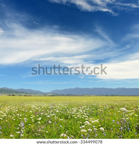 Wildflowers on the background of mountains and blue sky