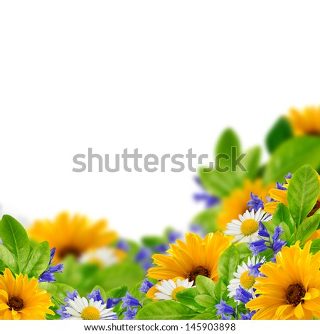 Wildflowers on the white background - stock photo