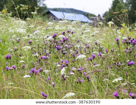 Wildflowers.Spring. - stock photo