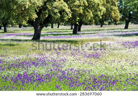 wildflowers with oak trees,alentejo region, Portugal - stock photo