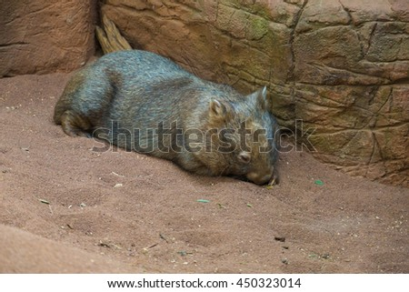 wildlife animal - stock photo