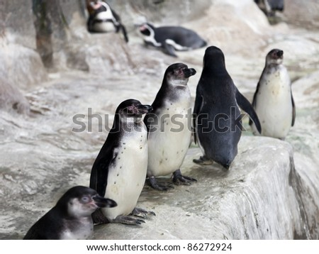 Wildlife animal nature - group of south pole penguin birds at cold snow antarctica ice - stock photo