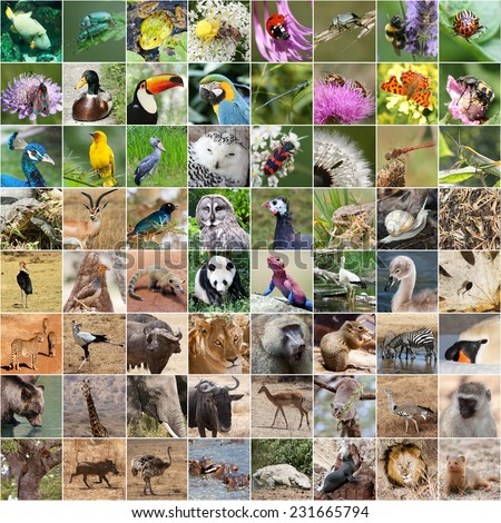 Wildlife collage with panda - stock photo