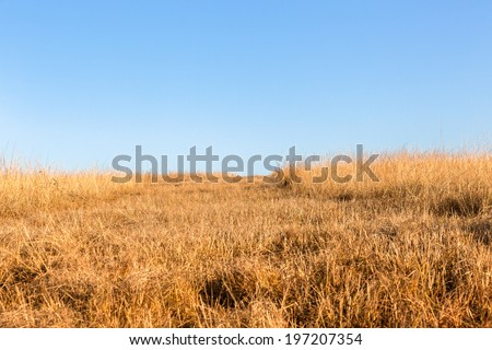 Wildlife Grassland Terrain Blue Sky Wildlife hill grasslands in winter dry contrasts against blue sky over the rugged terrain. - stock photo