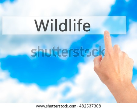 Wildlife - Hand pressing a button on blurred background concept . Business, technology, internet concept. Stock Photo