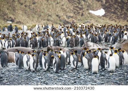 wildlife in Antarctica - stock photo