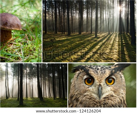 Wildlife in the forest at dawn - stock photo