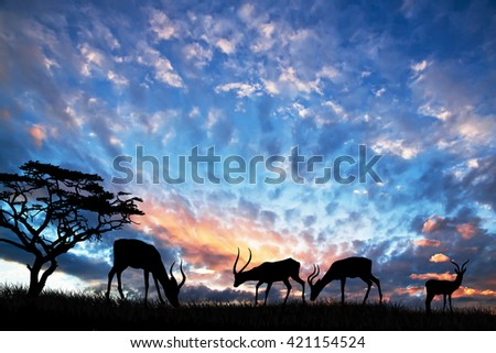 wildlife in the landscape - stock photo