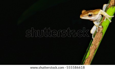 Wildlife nature at night. Close up frog