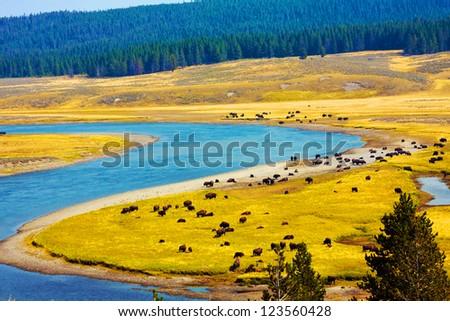Wildlife Paradise in Yellowstone National Park,Wyoming - stock photo