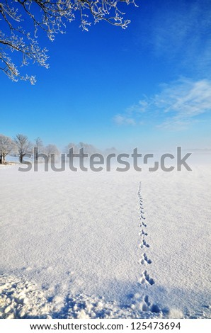 Wildlife tracks goes straight into a field with some mist and blue sky - stock photo