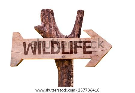 Wildlife wooden sign isolated on white background - stock photo