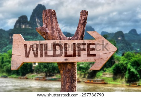 Wildlife wooden sign with forest background - stock photo