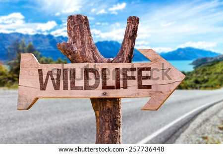 Wildlife wooden sign with road background - stock photo
