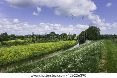 Wilfholme, Yorkshire, UK. Beverley & Barmston Drain with wild flowers line the bank with wildfowl flying on a bright summer day near Wilfholme, Yorkshire, UK.