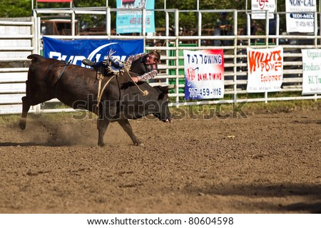 WILLITS, CA - JULY 4: Another rodeo bareback bull rider makes unsuccessful ride at the Willits Frontier Days, California's oldest continuous rodeo, held July 4, 2011 in Willits, CA.