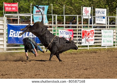 WILLITS, CA - JULY 4: Another rodeo bull rider makes unsuccessful ride at the Willits Frontier Days, California's oldest continuous rodeo, held July 4, 2011 in Willits, CA.