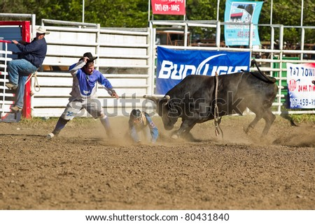 WILLITS, CA - JULY 4: Bull prevail over participant at the Willits Frontier Days, California's oldest continuous rodeo, held July 4, 2011 in Willits, CA.