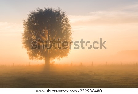 Willow bathing in sunlight on a misty morning - stock photo