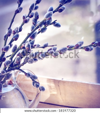 Willow branch with catkins/ Spring nature background - stock photo