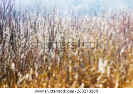 Willow branches buds spring forest bush texture - stock photo