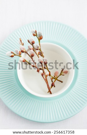 Willow branches with catkins in a white bowl on pastel blue plate from above. Simple spring decoration concept. - stock photo