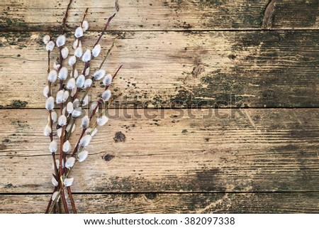 Willow branches with catkins on an old vintage wood from above. Easter background layout with free text space                  - stock photo