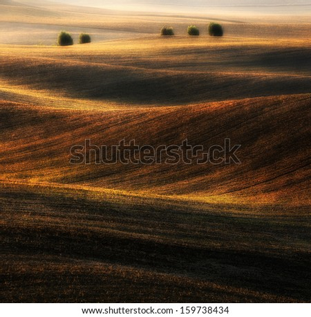 Willow on undulating field - stock photo