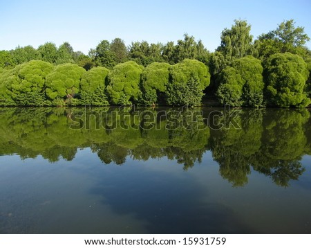 Willow trees near lake. Recorded in Izmaylovskiy park in Moscow, Russia.