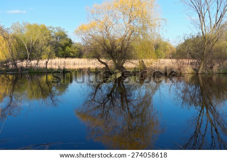 Willow trees reeds and wetlands with reflections in pond - stock photo