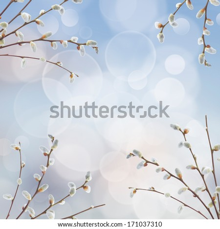 willow twigs with catkins frame on blue background - stock photo