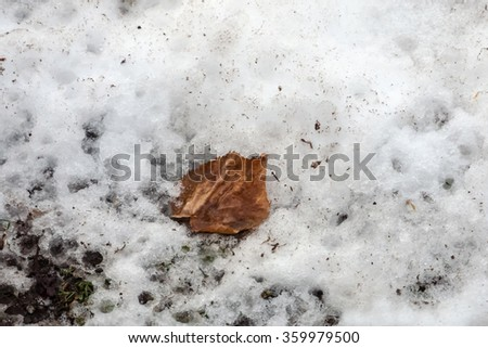 wilted, brown leaf on snow and ice