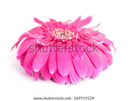 Wilted flower isolated on white - stock photo