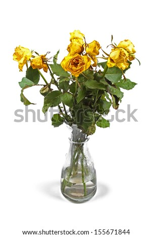 wilted roses in vase isolated on white - stock photo